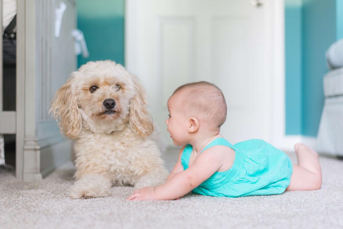 Welpe und Kleinkind